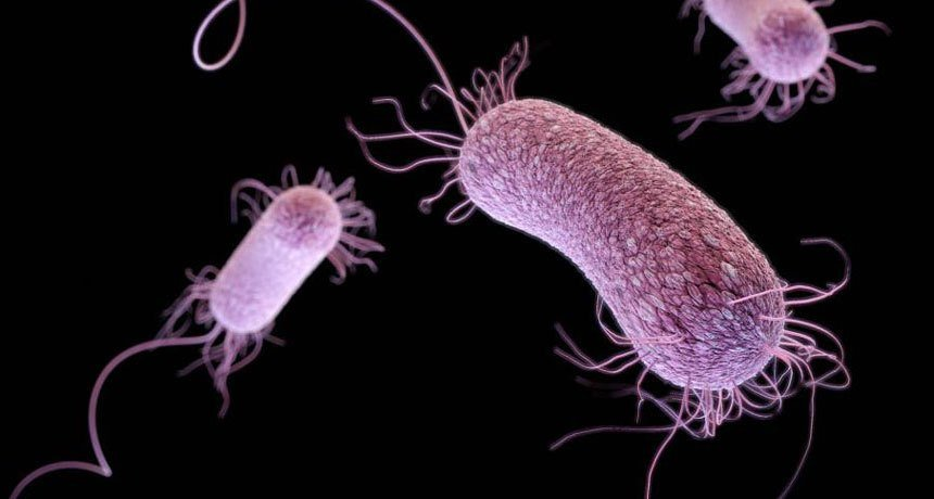 Superbacteriile ar putea împiedica eficacitatea chimioterapiei, avertizează oncologii britanici