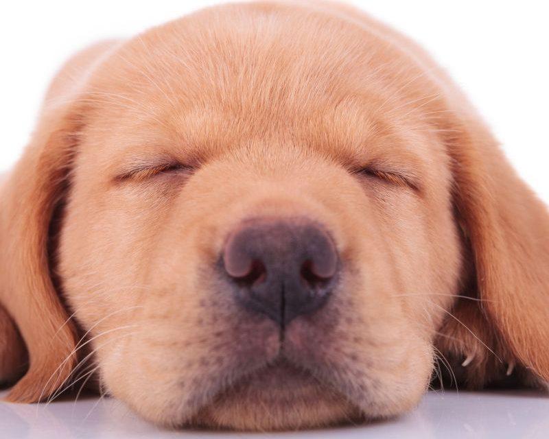 Cancer la creier, posibil tratament oferit de câini