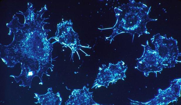 O abordare diferită: de ce nu facem cancer mai des?