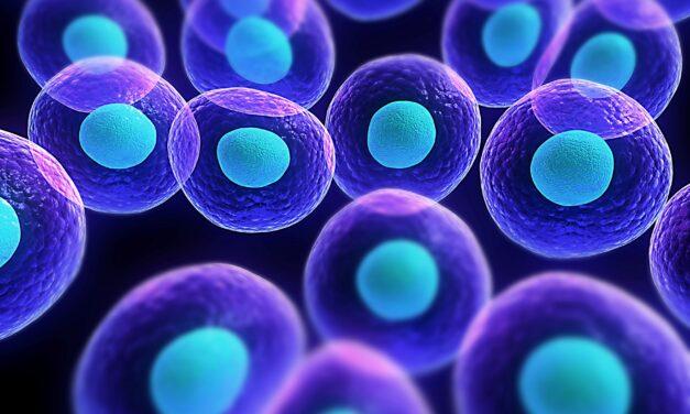 Celulele canceroase crescute în laborator diferă foarte mult de cele care apar în corpul uman
