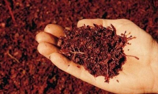 Acest preparat din struguri previne cancerul şi încetineşte îmbătrânirea